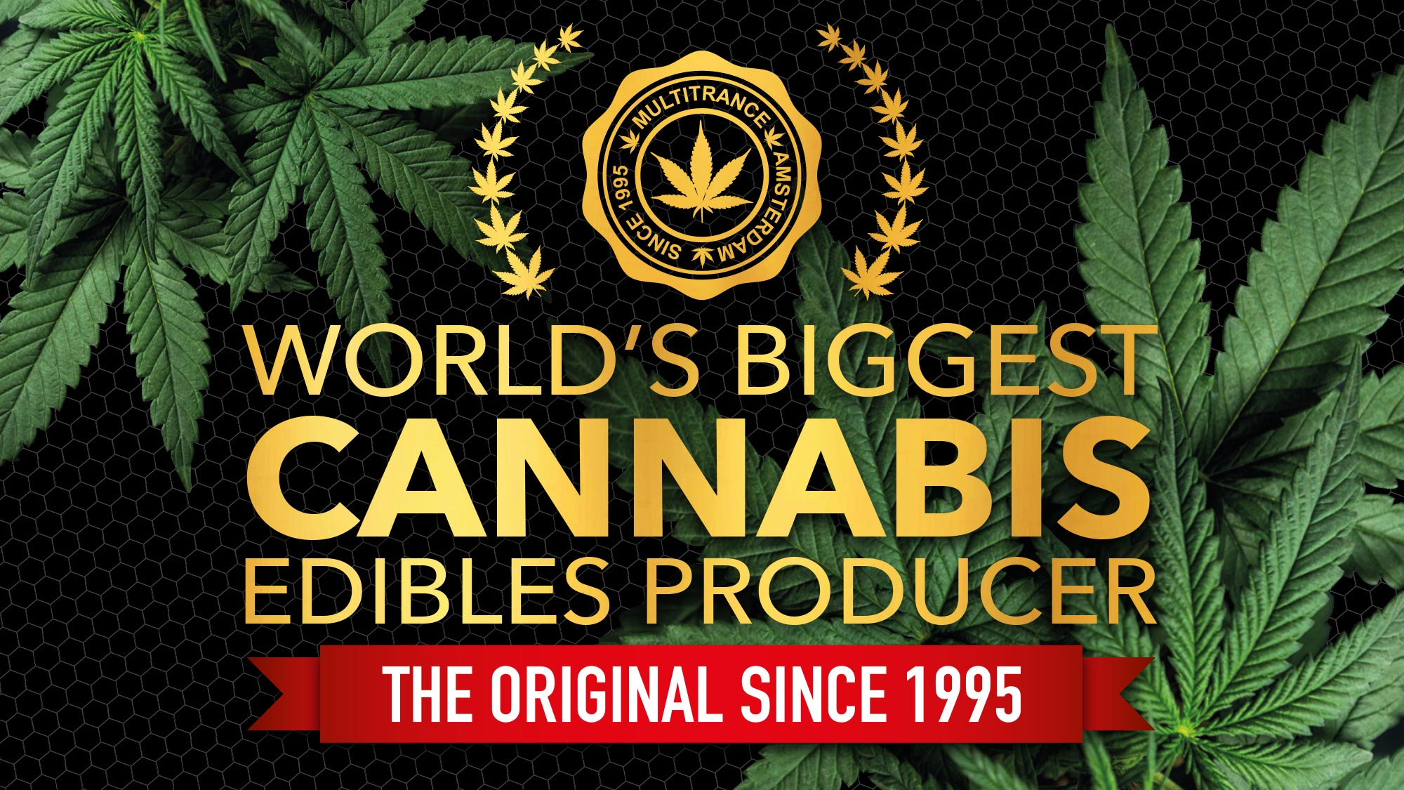 Multitrance logo displayed above title saying world's biggest cannabis edibles producer
